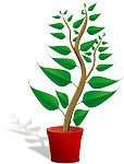 potted plant photo
